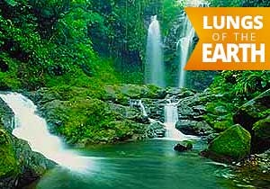 costa rica vacation package rainforest