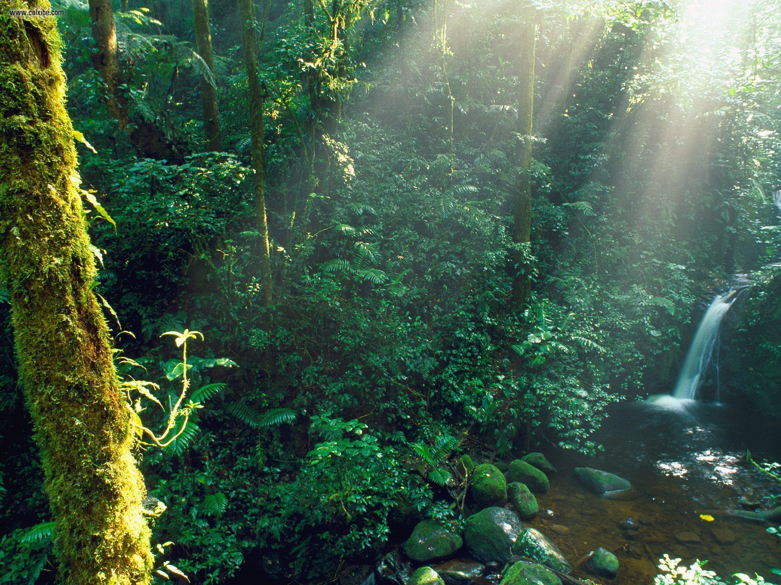 Costa Rican forests