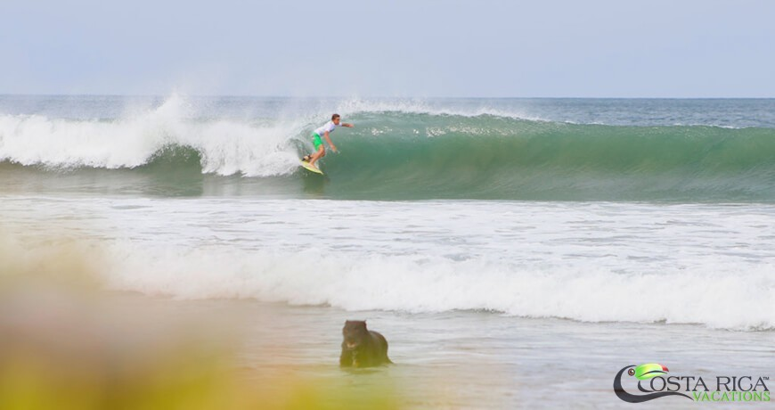 Surf-Packages-8